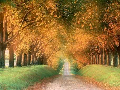 nature-chemin-img