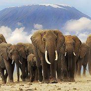 Carnet de voyage : Ma rencontre avec les éléphants